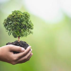 Nachhaltigkeit als Leitbild